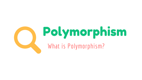 What-is-Polymorphism