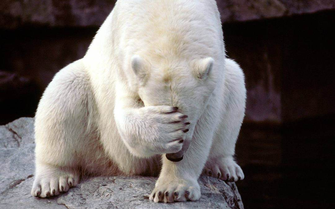 Embarrassed_bear